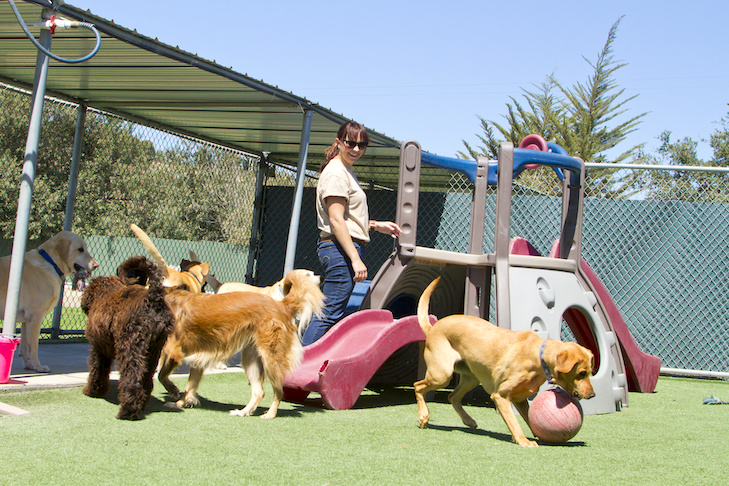 Doggie Day Care is an Awesome Choice.